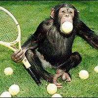 Original Primate vs Gella vs Djsavannah vs Breakneck (Monkey Tennis DJ Mix) Free Download! by Original Primate