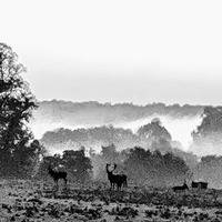 Antlers Dawn October's Story by Mike Nixon
